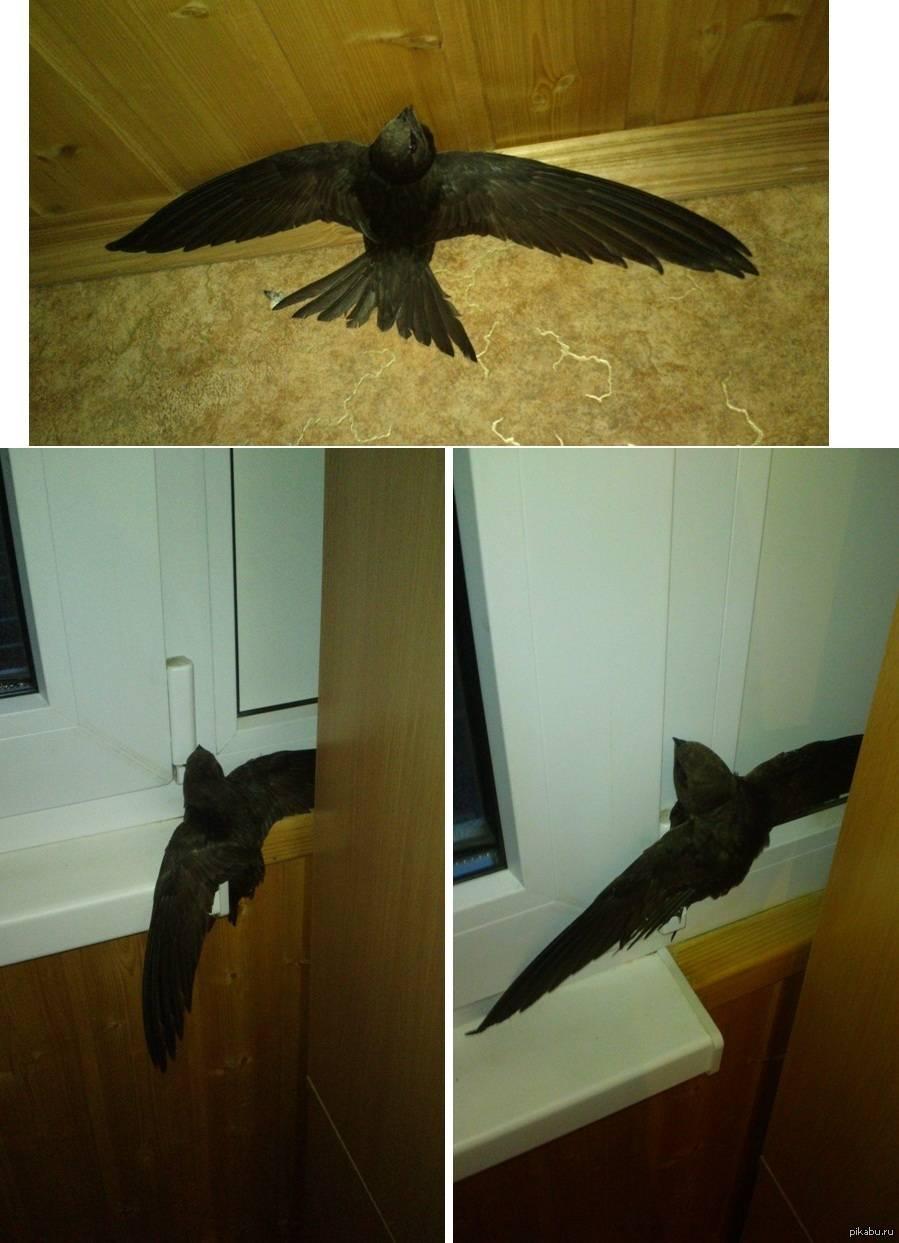 Птица залетела в окно - значение приметы