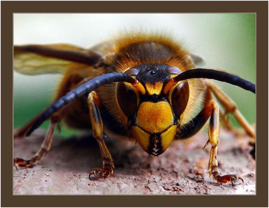 Народные приметы о бабочках - 16 примет и поверий связанных с бабочками